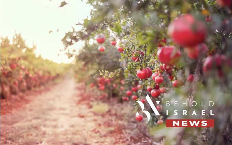 Tevel Creates Fruit-Picking Robots to Prevent Produce from Rotting on Trees
