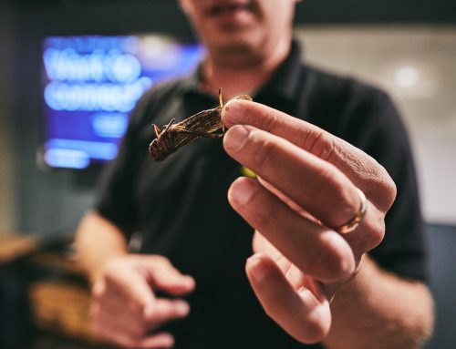 Israeli Innovation: Grasshoppers as a protein alternative that could feed the world