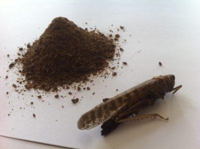 Israeli Innovation: Grasshoppers as a protein alternative