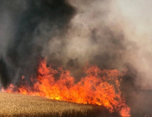 Hamas arson balloon attacks cause several wildfires in south Israel
