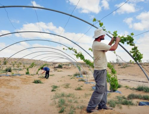 Israeli Agriculture & Food Companies Take 10 Spots on the List of the Top 50 Worldwide in 2020
